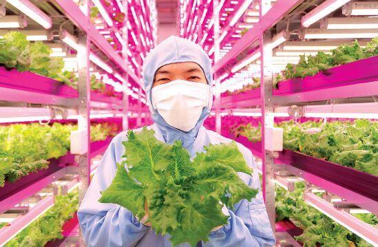 video najvacsia vnutorna farma na svete je 100 krat produktivnejsia ako tradicne farmy