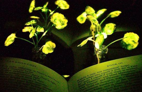 video osvetlenie nanobionickymi rastlinami nemusi byt az taka daleka buducnost