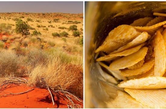 vedci objavili travu ktora chuti presne ako slane a octove chipsy