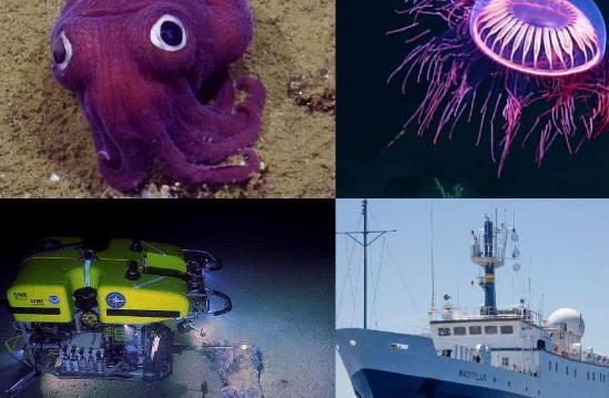 video pozrite sa na zvlastnu meduzu morskeho slimaka alebo kalmara